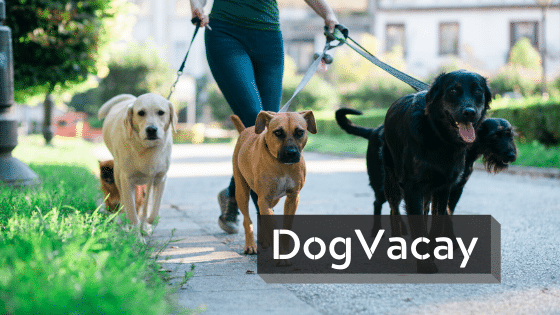 side business ideas | dogvacay